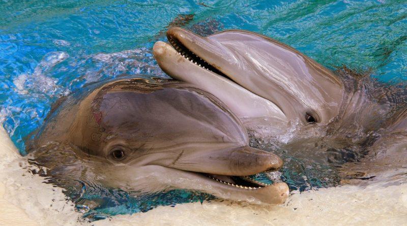 zdjęcia delfinów