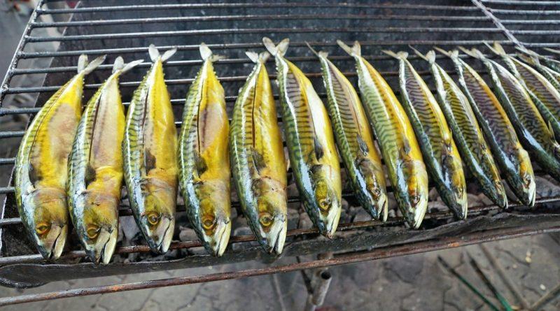łowienie ryb na wakacjach